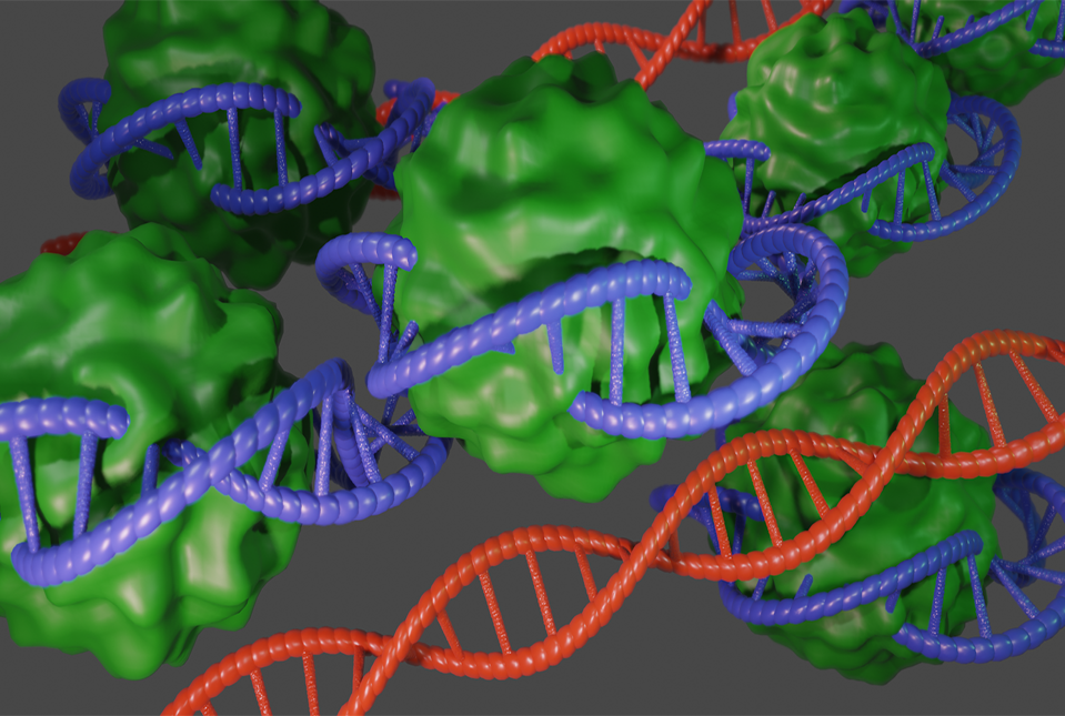 image of DNA wrapped around protein complex