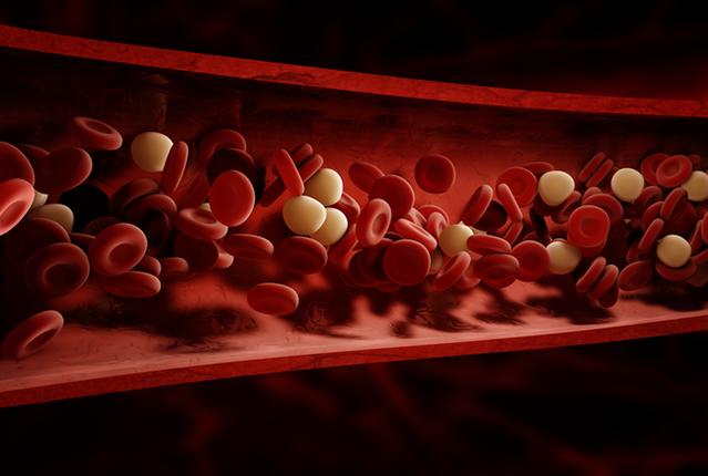 Blood cells flowing through vessel