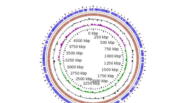 circular genome of O. splanchnicus