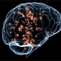"""Event Image for """"Translating Thought into Blood Flow in the Brain: Capillaries as Sensors of Neural Activity"""""""
